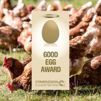 Our Good Egg Award certificate